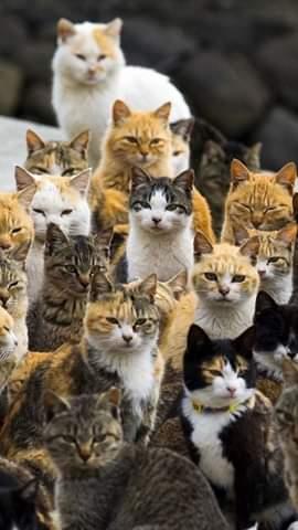 Віддаю у добрі руки кошеняток - ДваМіста Інформаційно-розважальний портал Волочиська, Підволочиська